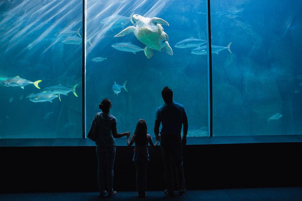 As férias das crianças são um momento de diversão e relaxamento, mas também é possível aliar aprendizado na vida dos pequenos.